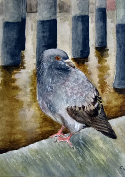 Pigeon (Thames water bird - Thames Path series)