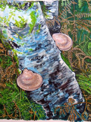 Fungi on a Silver Birch Trunk