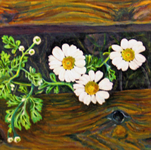 Daisies on a wooden step